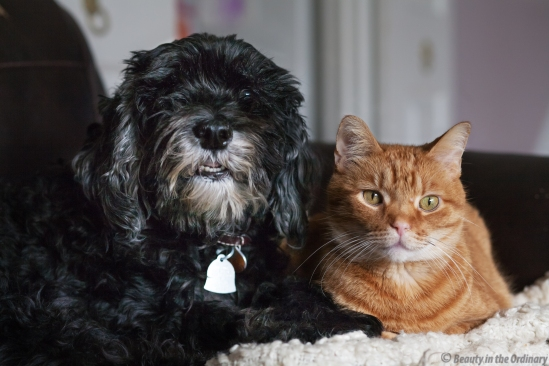 Portrait of a Cat and a Dog