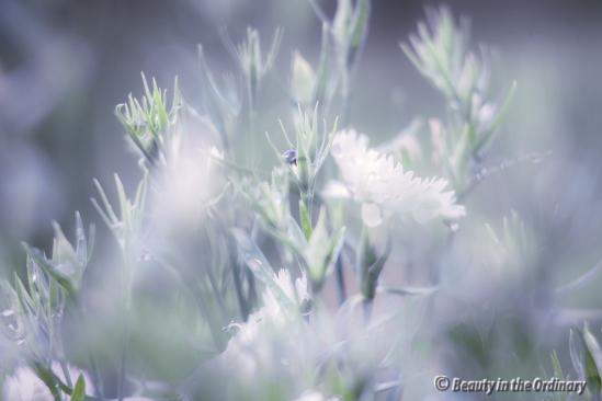 Flower Buds After Rain 2