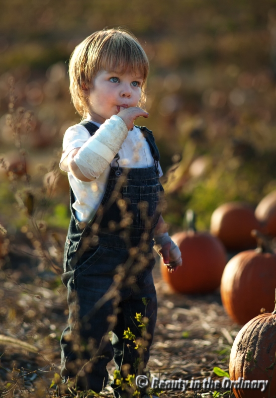 pumpkin_picking_at_gaver_farm