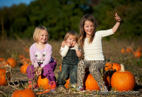 pumpkin_picking_at_gaver_farm_2