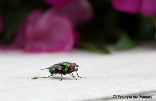 Even-Flies-are-Pretty